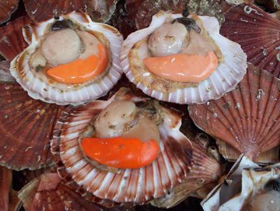 Noix de saint jacques, sauce corail
