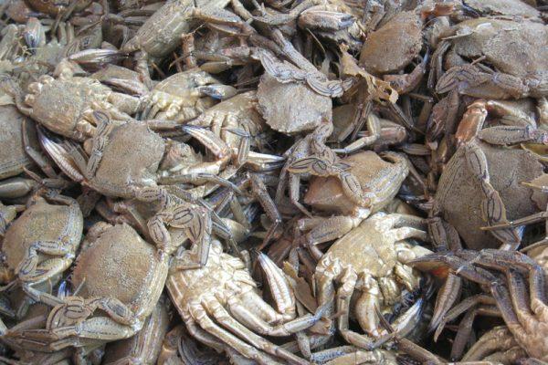 Coulis de crustacés