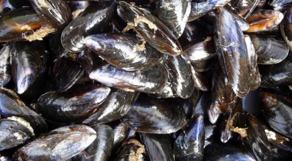 Moules marinières au Noilly