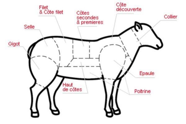 L'agneau – Les découpes