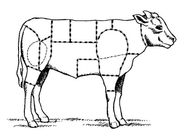 Le veau – Généralités